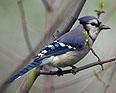 BirdPod